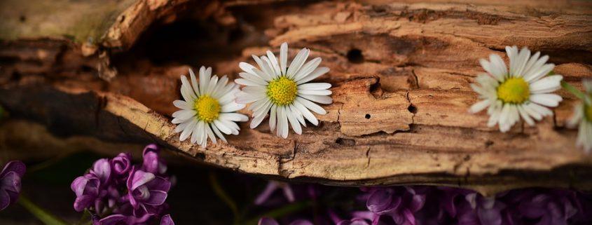 wood-1406895_960_720